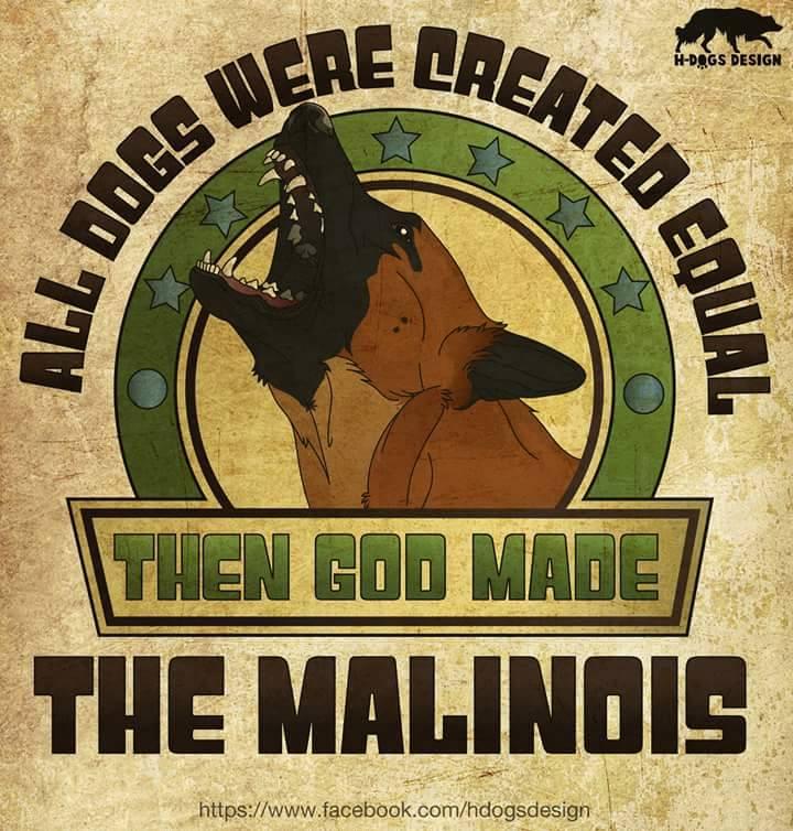Aux amoureux du malinois. 10997310