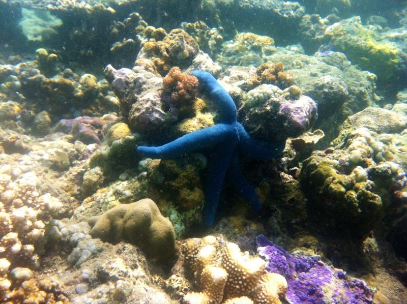Photos récifs indonésiens Img_6311