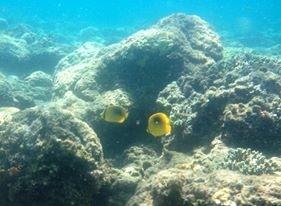 Photos récifs indonésiens Img_6312