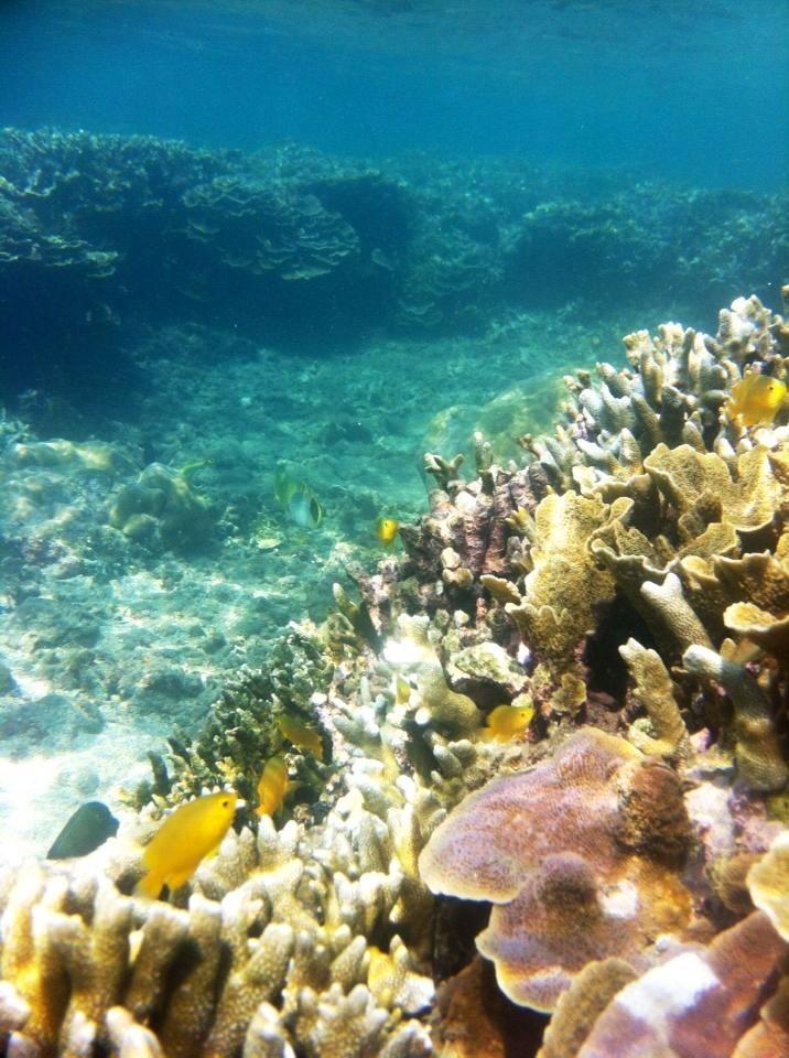 Photos récifs indonésiens Img_6610