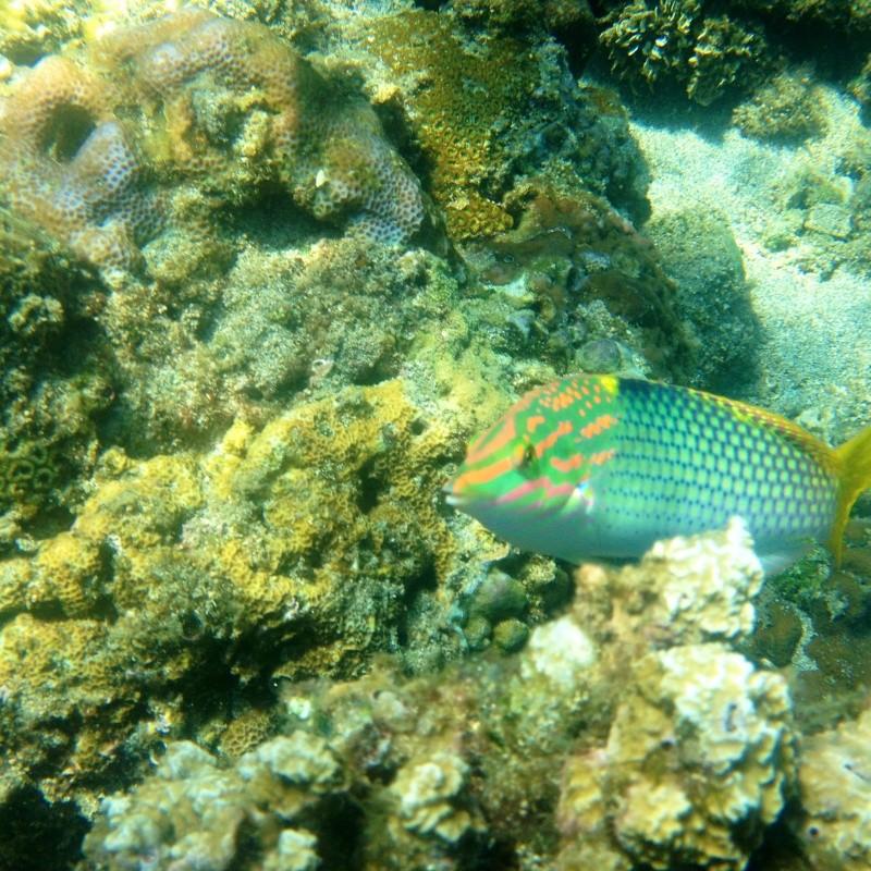 Photos récifs indonésiens Img_6810