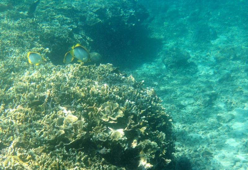 Photos récifs indonésiens Img_6811