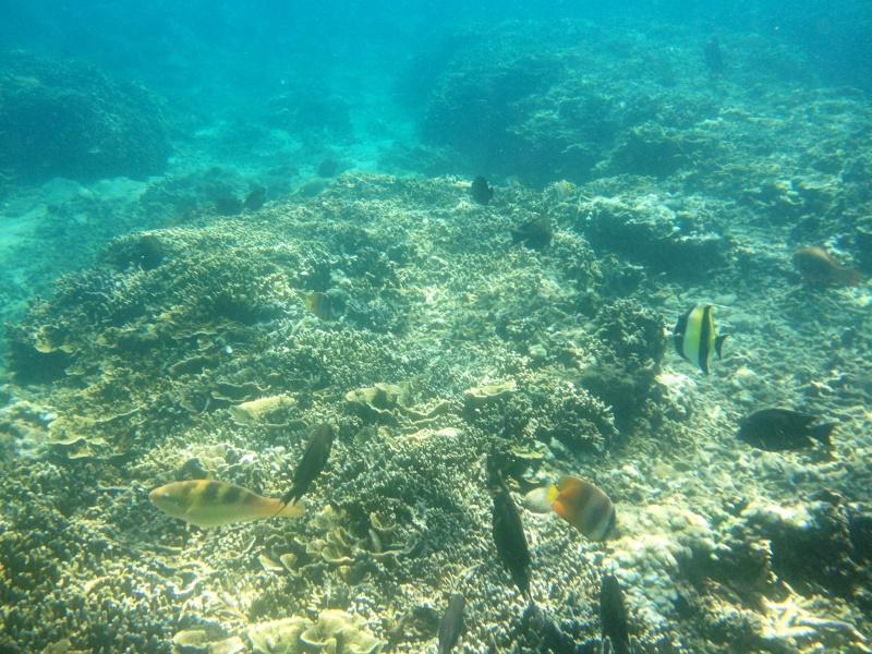Photos récifs indonésiens Img_6910