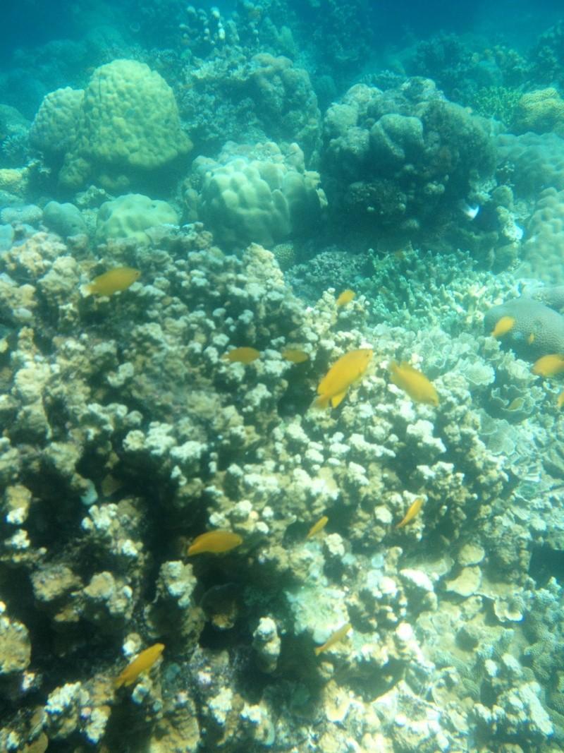 Photos récifs indonésiens Img_6911