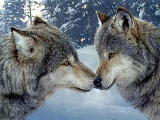 Les Loups - Page 2 95421210
