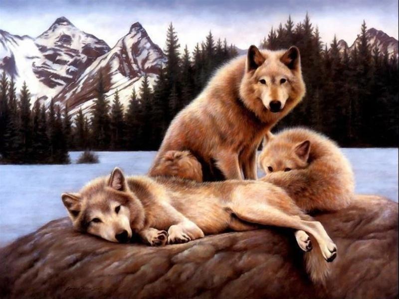 Les Loups - Page 2 Les_lo10