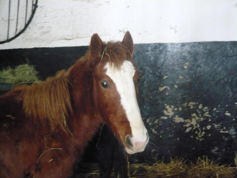 MARTYN, poney welsh, né en mai 2009 (ADOPTE) Martij10