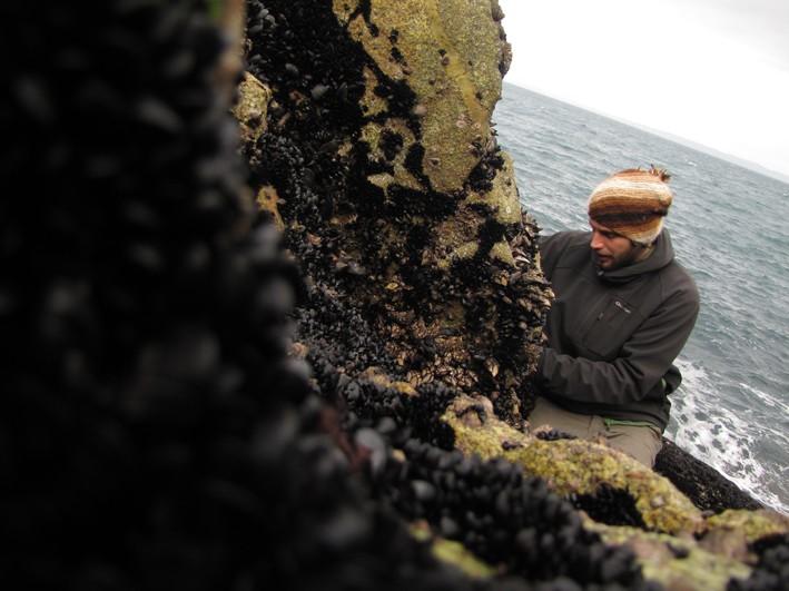 Suivi 2011 du Crave à bec rouge (Pyrrhocorax pyrrhocorax) en Bretagne Img_7333