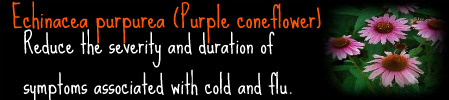 .Healers Guide. Purple10