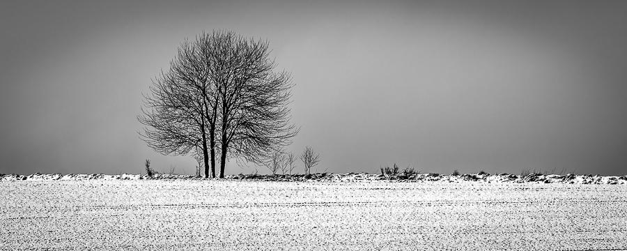 1 arbre en hiver 076-ar10