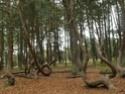 Forêts insolites Forets10