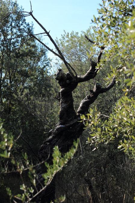 Steeve Di Marco : Energies, êtres de la natures, élémentaux... Img_0711