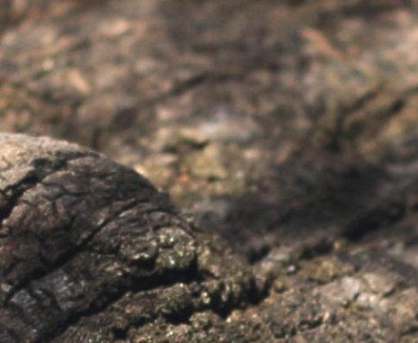 Steeve Di Marco : Energies, êtres de la natures, élémentaux... Ph762r13