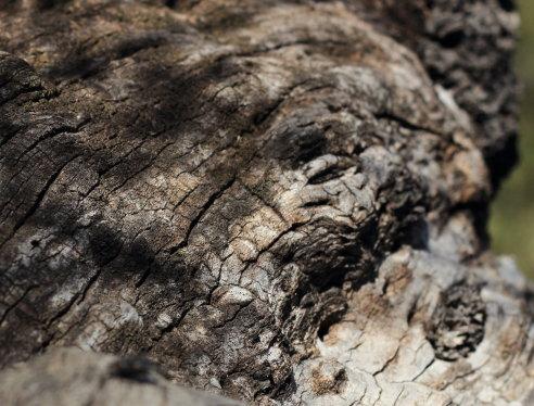 Steeve Di Marco : Energies, êtres de la natures, élémentaux... Ph762r16