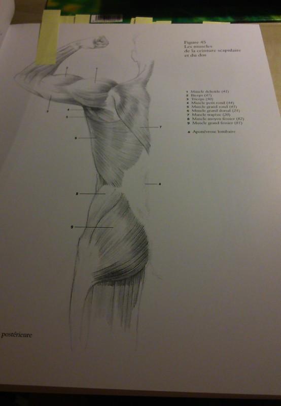 s'entraîner de façon simple pour apprendre à dessiner le corps. 0210