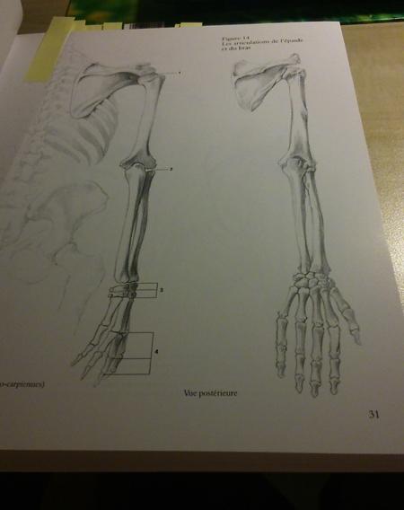 s'entraîner de façon simple pour apprendre à dessiner le corps. 0310