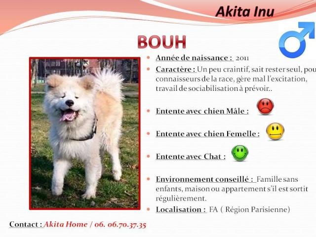 Bouh Akita Inu poils long (m)  ok chats et femelles chiens 2011 ASSO44 10562910