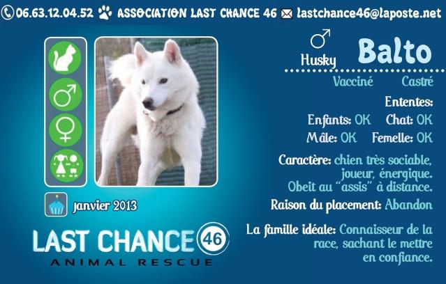 Balto type Husky ok chiens chats enfants ASSO46 ADOPTE 10830810