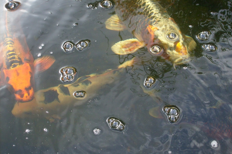 mon bassin aujourd'hui S7302116