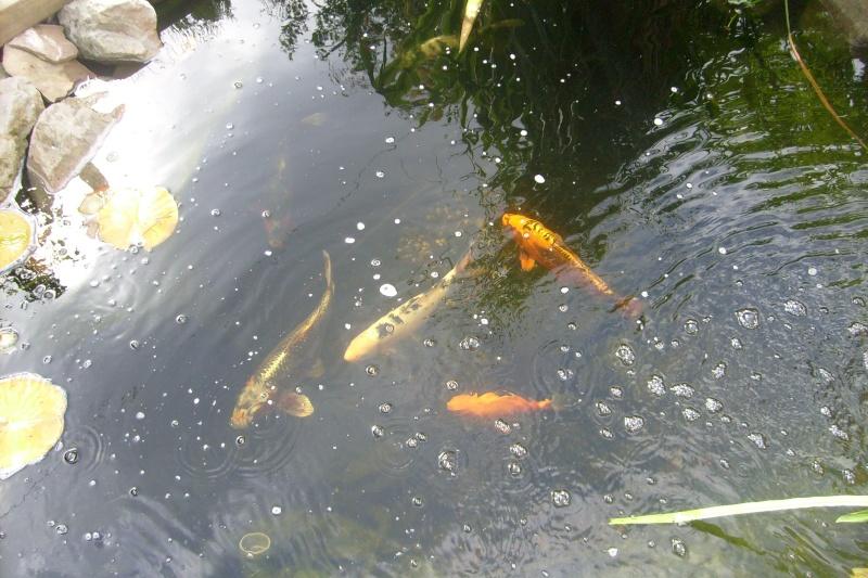 mon bassin aujourd'hui S7302117