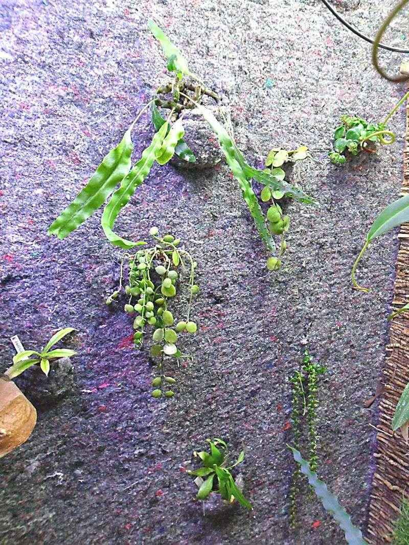 Un mur végétal dans ma serre salon 7_plan10