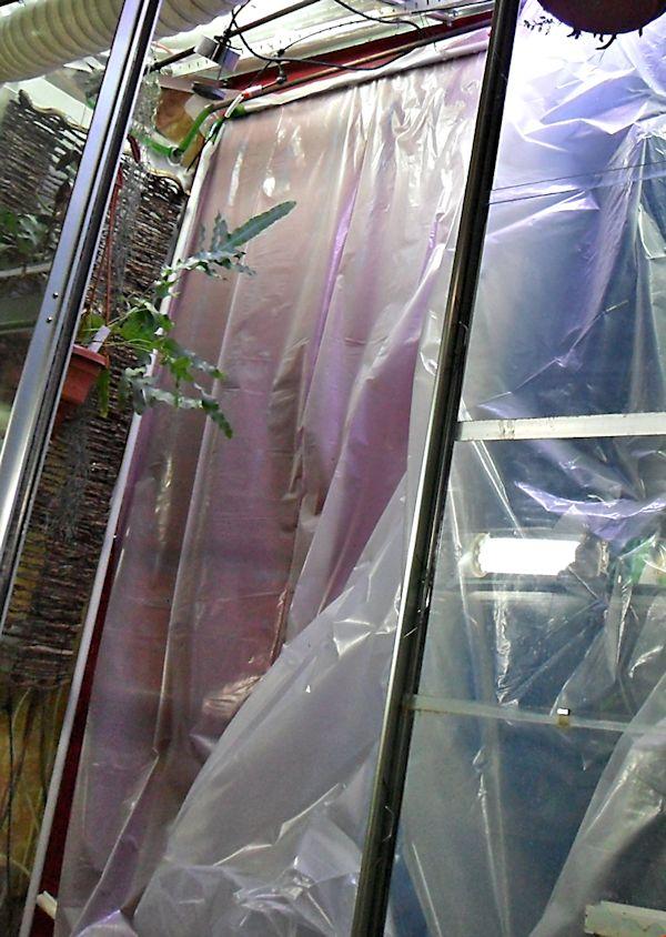 Un mur végétal dans ma serre salon Bache_10