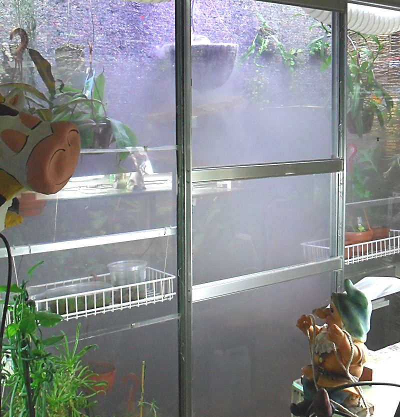 Un mur végétal dans ma serre salon Brumi_11