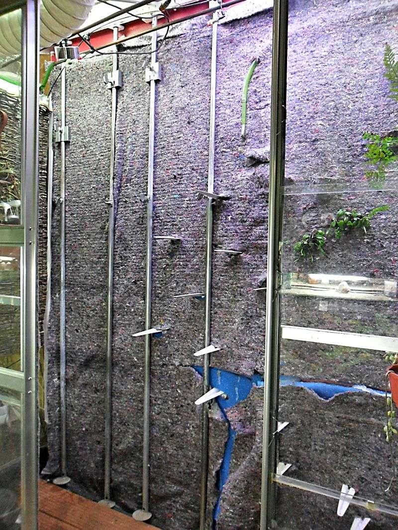 Un mur végétal dans ma serre salon Chande10