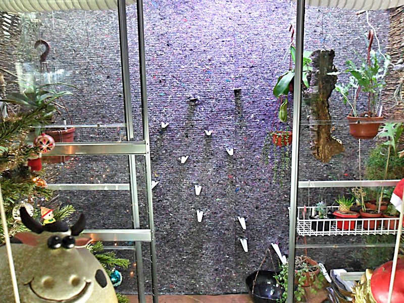 Un mur végétal dans ma serre salon Feutre12