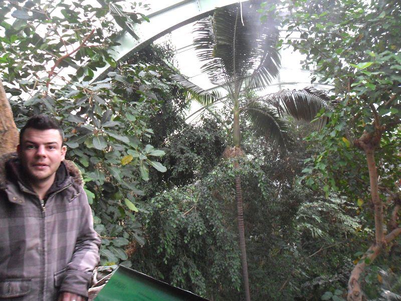 Jardin des plantes à Paris (5e) en décembre 2014  Les_gr11