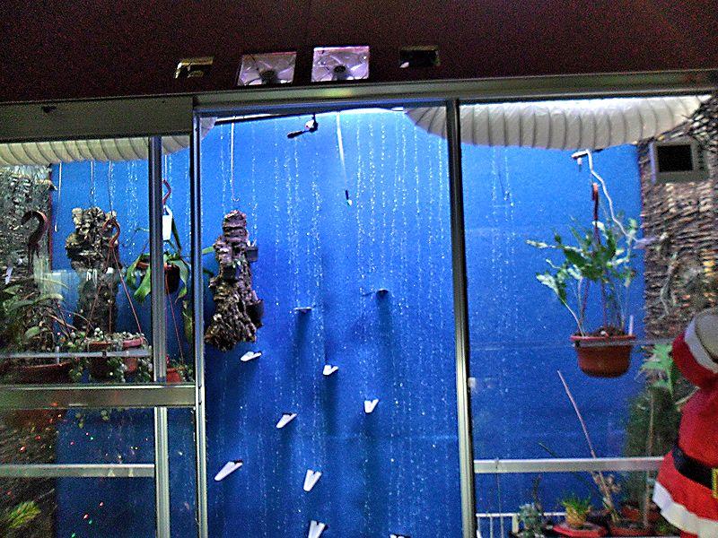 Un mur végétal dans ma serre salon - Page 2 Mousse10