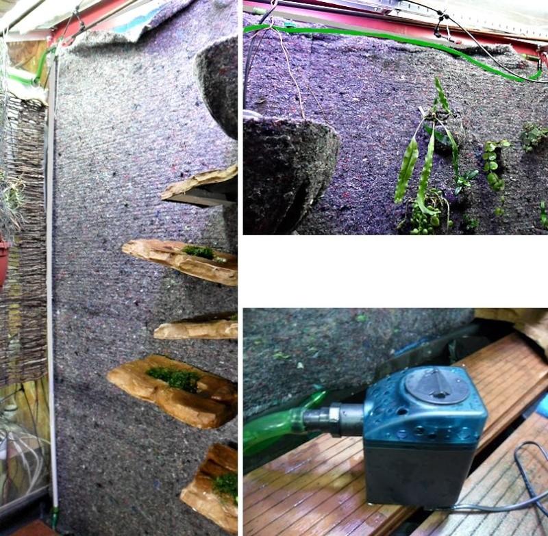 Un mur végétal dans ma serre salon Nouvel10