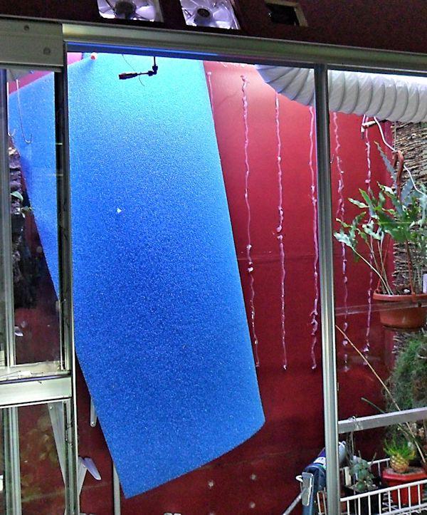 Un mur végétal dans ma serre salon - Page 2 Pose_m10