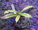 Un mur végétal dans ma serre salon N_hoke10