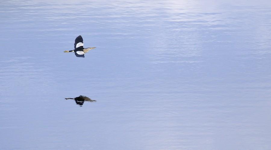 Série d'oiseaux prises à Remerschen 10080110
