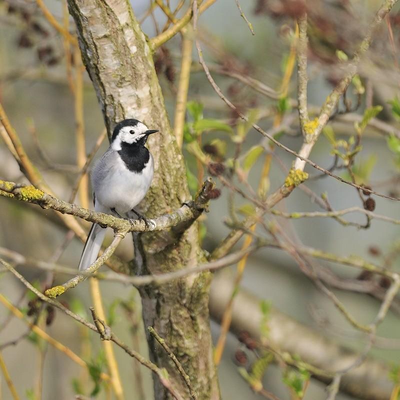 Série d'oiseaux prises à Remerschen 11040910