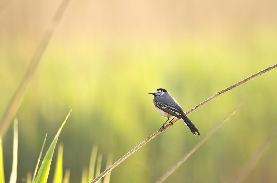 Série d'oiseaux prises à Remerschen 11042310