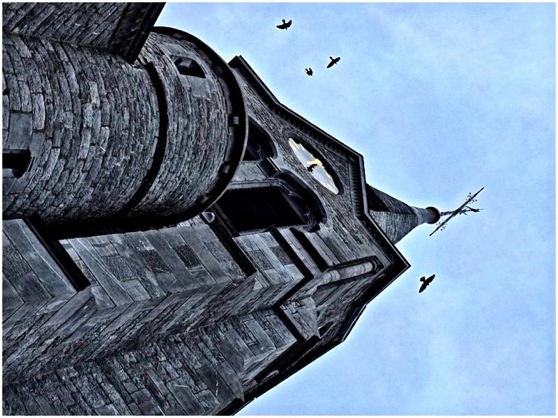 le clocher  Dscf5610