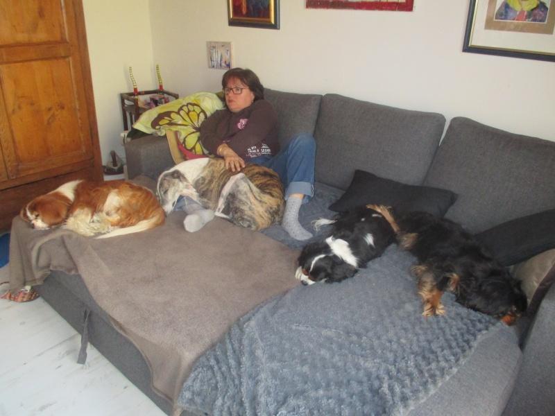 Izan galgo mâle à l'adoption  Scooby France –  Adopté ! - Page 36 Img_1629