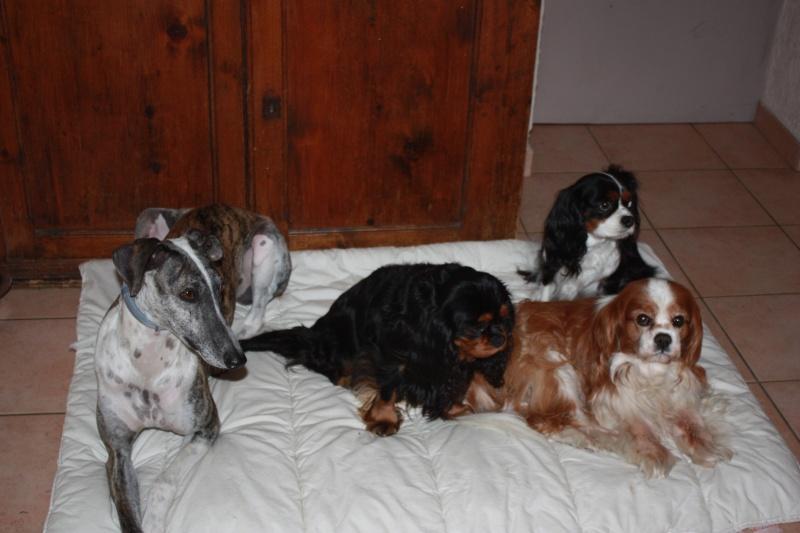 Mon zhom et les chiens Img_6610