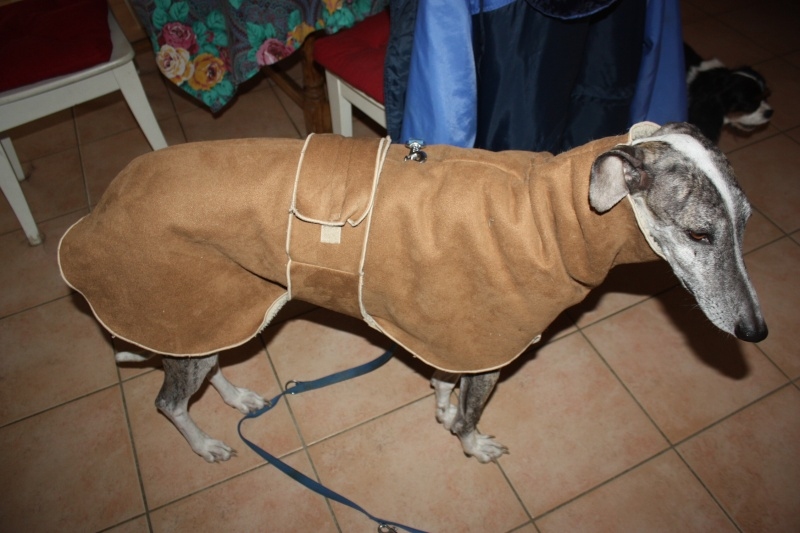 Izan galgo mâle à l'adoption  Scooby France –  Adopté ! - Page 35 Img_7016