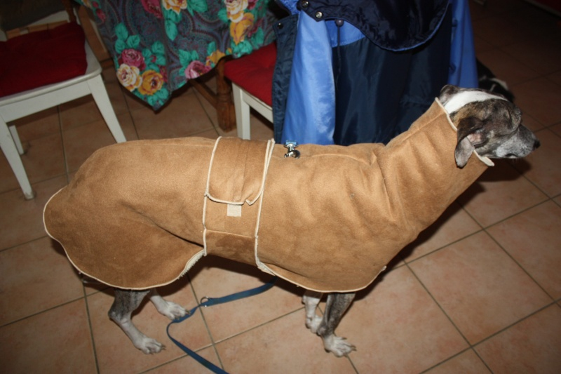 Izan galgo mâle à l'adoption  Scooby France –  Adopté ! - Page 35 Img_7017