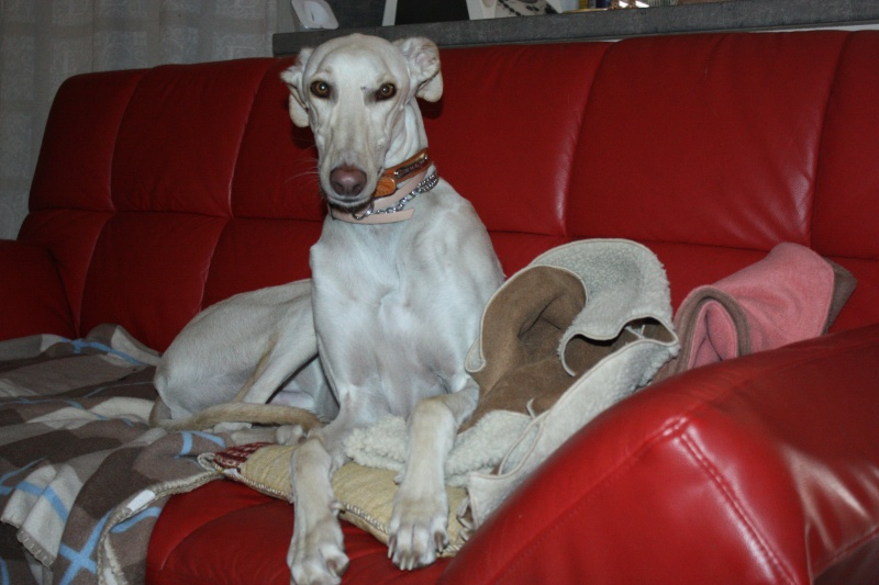 Galgo party chez Domy. 26/02/2015 Img_7111