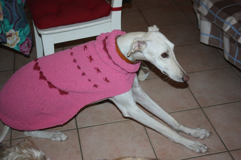 Galgo party chez Domy. 26/02/2015 Img_7112