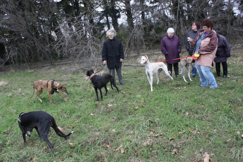 Galgo party chez Domy. 26/02/2015 Img_7114
