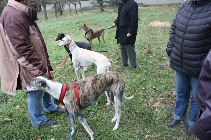 Galgo party chez Domy. 26/02/2015 Img_7115