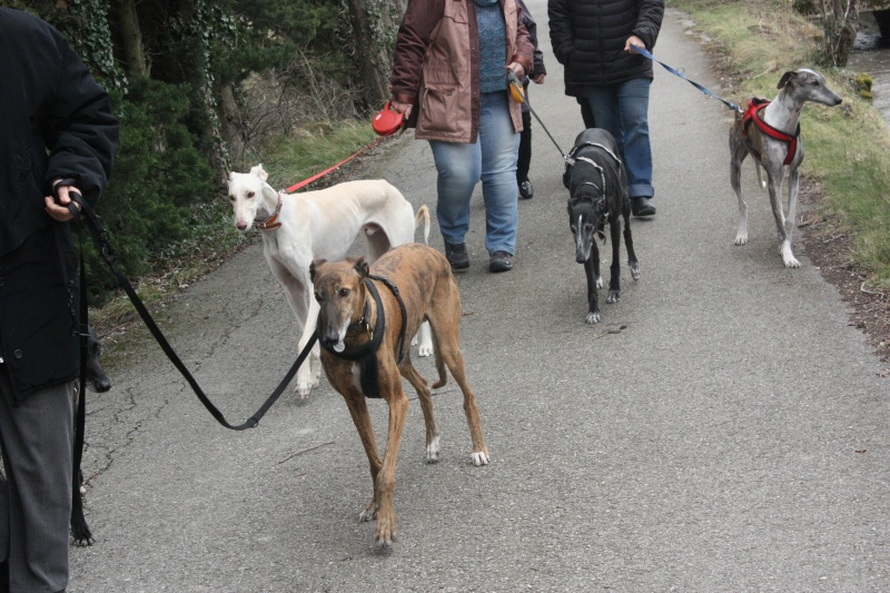 Galgo party chez Domy. 26/02/2015 Img_7117