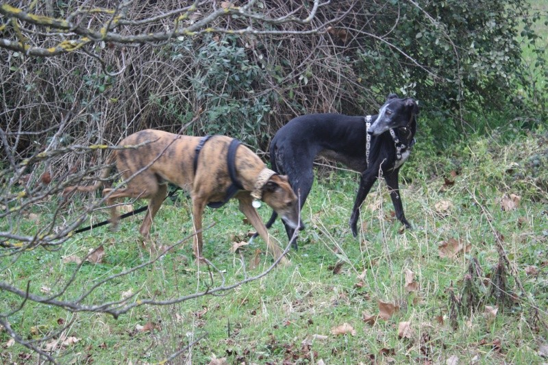 Galgo party chez Domy. 26/02/2015 Img_7213