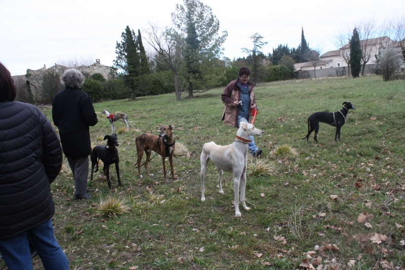 Galgo party chez Domy. 26/02/2015 Img_7214