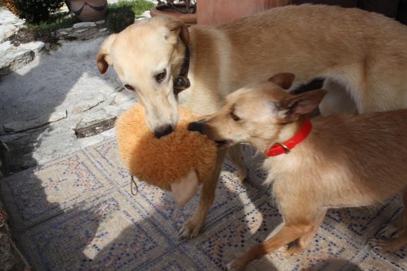 Bambi ,petite podenca de poche !Adoptée  - Page 2 Img_7412